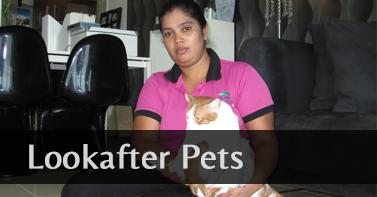 Pets Lookafter